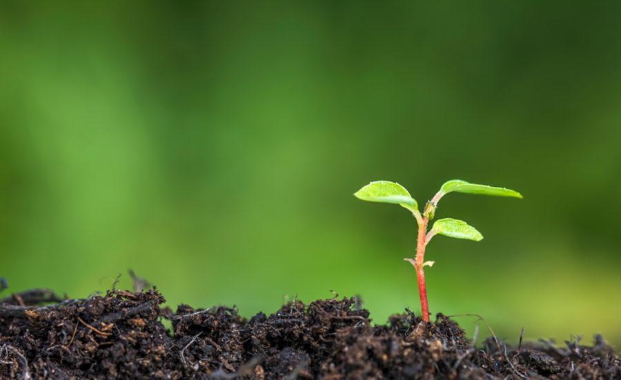plantando-igrejas-e1490373557974.jpg